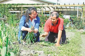 楊文港(右)罹患小腦萎縮症,趴跪在田間種花、種菜、除草。 記者陳家倫/攝影