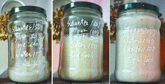 利用裸麥粉(rye)養酵母最快且有效。圖為麵團餵養過程的變化。
