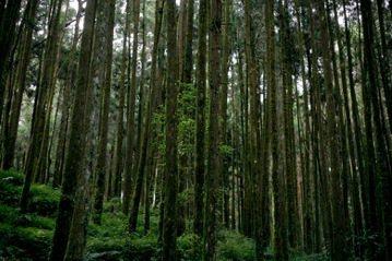 看不見的山林
