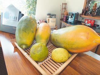 木瓜報系資料照片