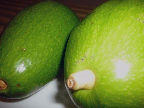 還未成熟的酪梨呈青綠色,而且觸感很硬。 圖片來源╱台灣好食材 Fooding