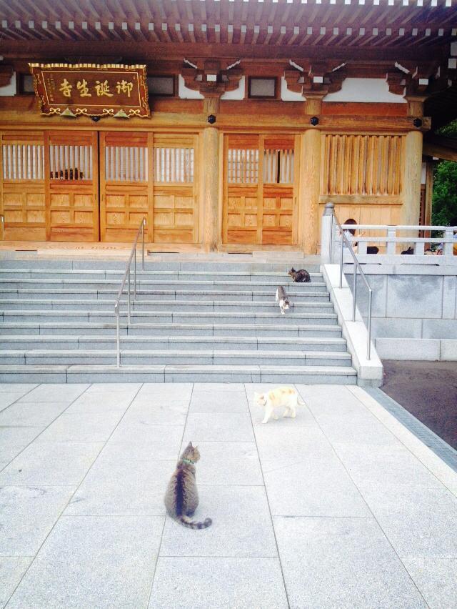 圖片來源/御誕生寺