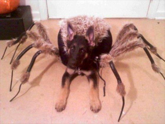 狼犬被穿成長毛大蜘蛛,你敢抱抱嗎? 圖片來源/ moviepilot