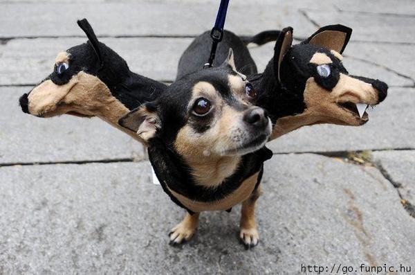 哈利波特中的三頭狗,好像有點萌,但是還是有點驚嚇! 圖片來源/sodahead