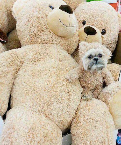 媽媽妳看那裡有熊熊家族~ 圖片來源/ facebook