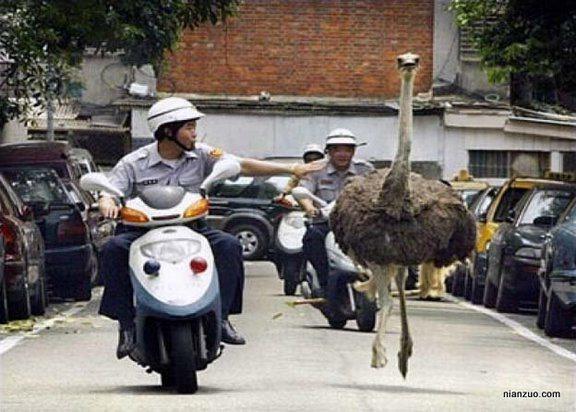 圖片來源/ forumosa.com