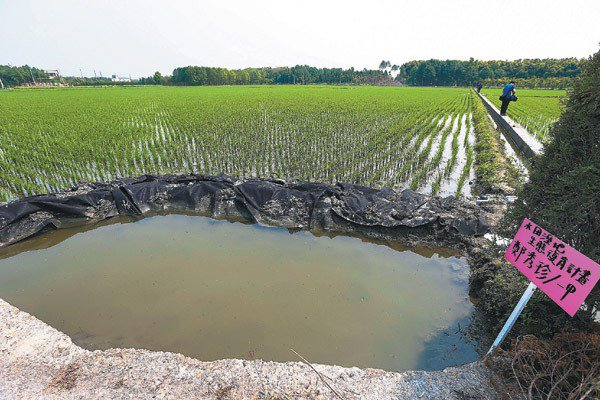 彰化溪州水田溼地生態復育計畫在水田周邊挖出儲水池,希望用水田包圍濕地的概念復育生...