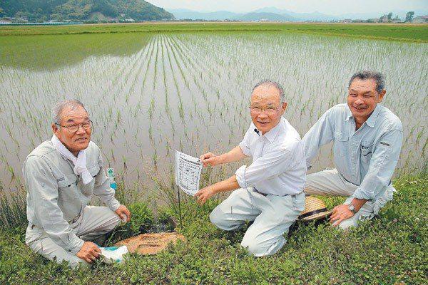 日本兵庫縣豐岡市以白鸛米復育農法進行水稻種植的農夫。 記者陳易辰/攝影