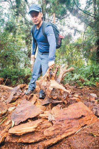 望鄉部落青年自行組織山林巡守隊,不定期會到山林間巡查是否有山老鼠盜伐牛樟,並通報...