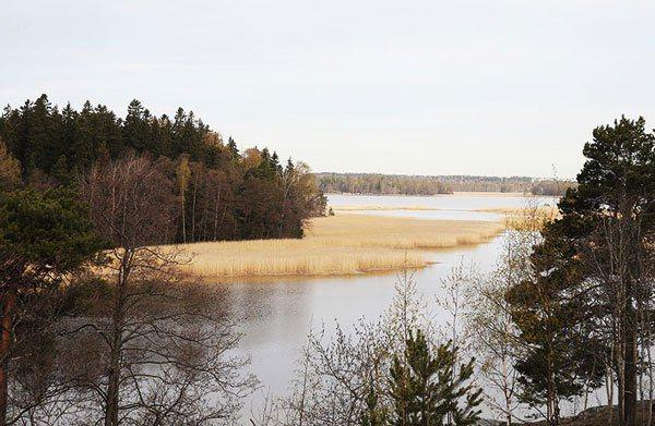 芬蘭環保團體成功保留「蘆葦」的生態個案。 記者蘇健忠/攝影