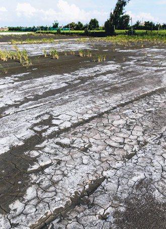 彰化縣大城鄉為目前全國地層下陷速率最嚴重之地區,靠海的一處農田,留下海水蒸發後的...