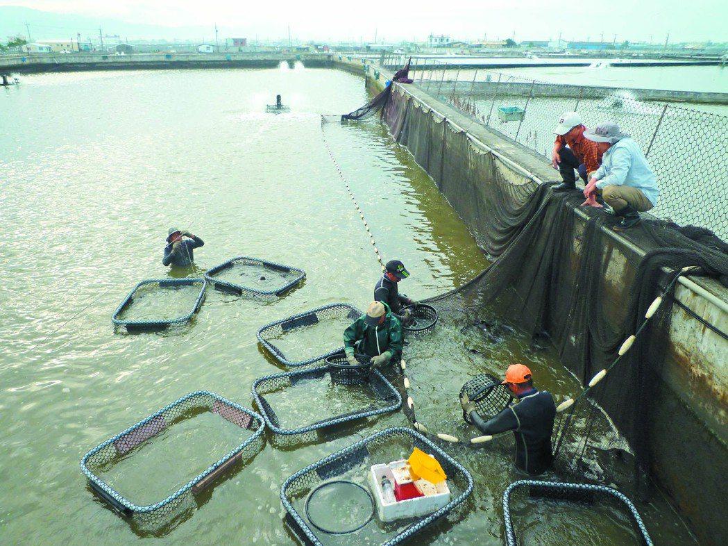 屏東養殖業長期抽取地下水,造成地層下陷。 記者張進安╱攝影