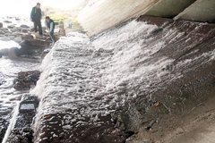 灌排同流…工業廢水 毒害農田