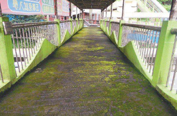 ➡南榮路、南新街口天橋,覆蓋滿滿青苔。 記者游明煌/攝影