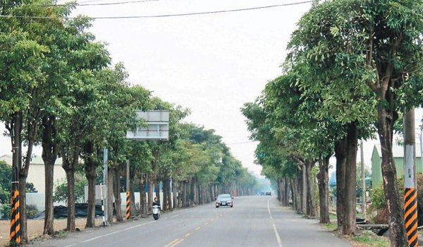善化區六分寮聯外道路的行道樹黑板樹,居民認為樹根易造成路面破損,經沿途3里里民決...