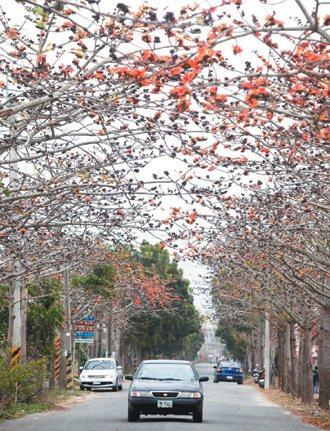 台南後壁林初埤木棉道,優美風景吸引不少遊客,但棉絮讓人受不了。 記者劉學聖/攝影