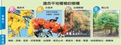 台南/一「樹」風景 市政大學問