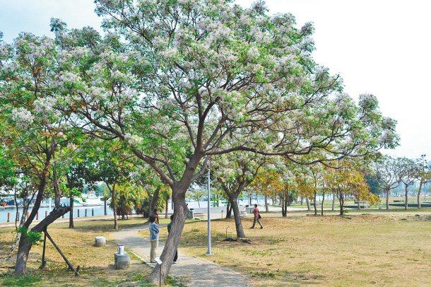 只要依地區及環境特性,選對了樹,就能讓都市景觀加分。 記者鄭惠仁╱攝影