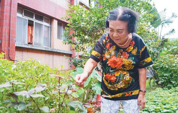 78歲的李林秀枝喜歡種菜,在基隆市立仁愛之家裡有一塊小苗圃,每天早上盥洗後,第一...