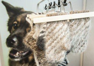 WOUF團隊運用狗毛製成毛線,編織各式手套、圍巾,讓愛狗人士愛不釋手。 特派記者...