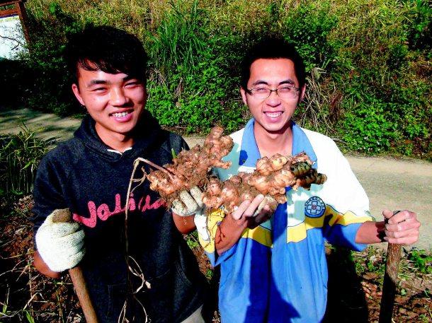 薑麻園社區發展協會理事長謝添燊(左),與最年輕薑農涂育誠(右)都是七年級生,在祖...