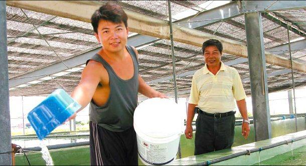 卅五歲的林宏賓(左一)放棄科技業,傳承父親林石連(右)養殖石斑魚苗的事業,他說:...
