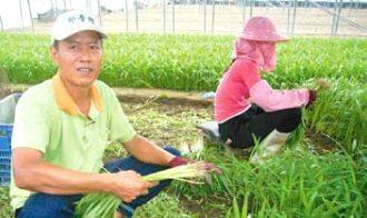 中年失業的洪志遠種空心菜種出名,,在台北拍賣市場總是最高價,被稱為「空心菜王...