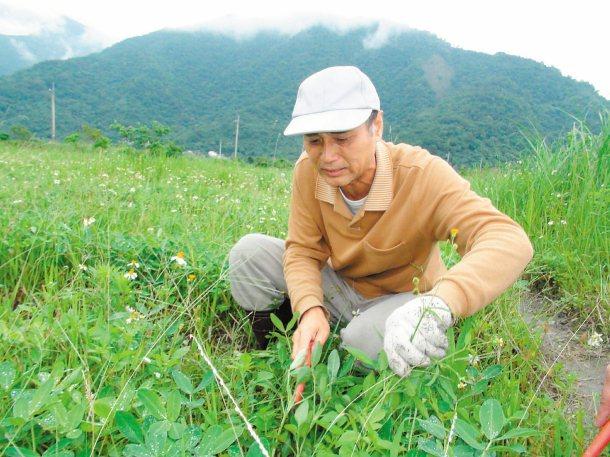陳昌江說,他這裡斬草不除根,在草裡找花生,眼睛要看仔細些。 記者吳淑君/攝影