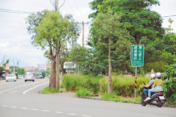 花蓮縣政府在較多老人活動的路段,設立號誌,提醒用路人注意老人、禮讓通行。 記者段...