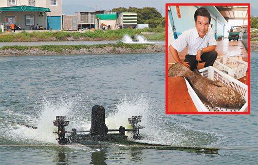 受惠於兩岸簽訂ECFA,高雄永安的石斑魚養殖面積增加二成五,盛洋冷凍食品總經理蘇...
