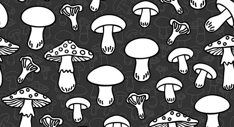 隨著養殖菇的技術發展,如今可以人工種植的菇類已有很多種。 圖片來源/123RF