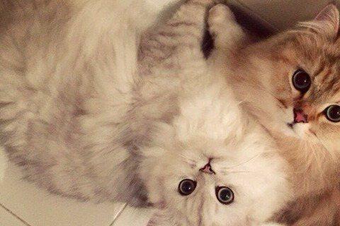 舒淇因自家愛貓感到崩潰,不是因為貓兒抓壞衣服,也不是因為把她給抓傷了,而是她本以為是girl的母貓「Maymaygirl」居然是公的!舒淇原本有隻公貓「Maymayboy」,後來又抱了一隻母貓「Ma...
