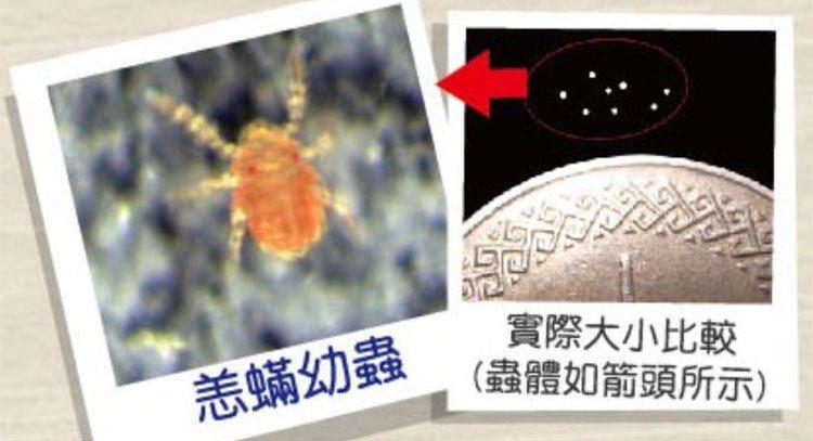 恙蟎幼蟲非常小,肉眼不易辨識,做好自身防護是最好的預防方式。 圖/疾管署提供
