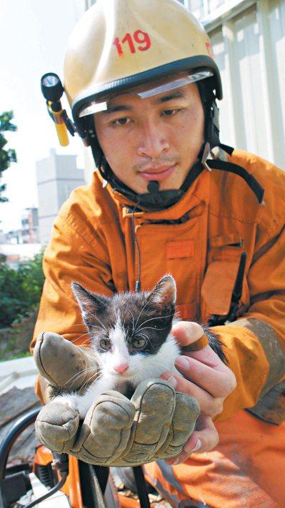 消防員「副業」包山包海,包括抓貓、抓狗、捕蛇、捕虎頭蜂等為民服務的工作。 報系資...