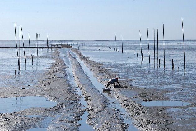 大城北堤外的濕地有著豐富的潮間帶生態。 記者趙惠群/攝影
