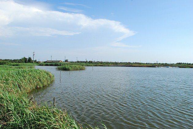 大城北堤附近的沼澤地。 記者趙惠群/攝影
