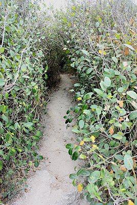 高雄柴山上很類似「龍貓樹洞」的地方。 記者林和謙/攝影