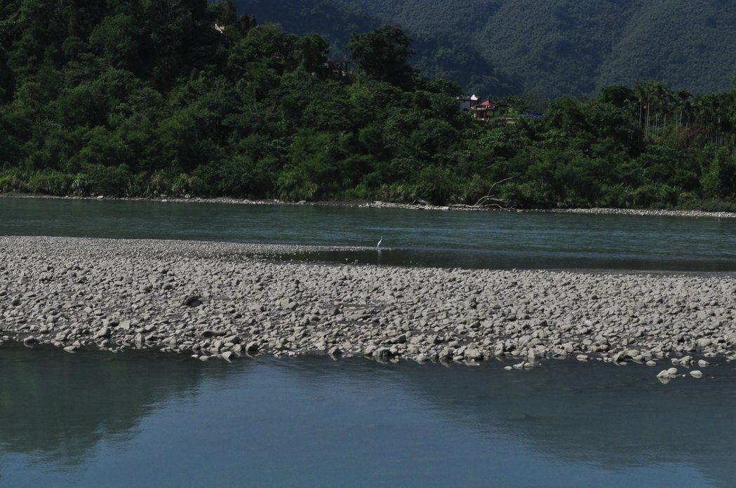 梅花湖上的水鳥生態豐富。 記者許信文/攝影