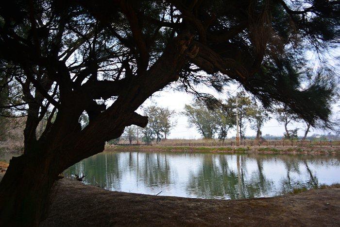 好美寮的祕密景點「新塭苗圃」,木麻黃如畫框一般框住廢棄的魚塭,如夢似幻。 記者趙惠群/攝影