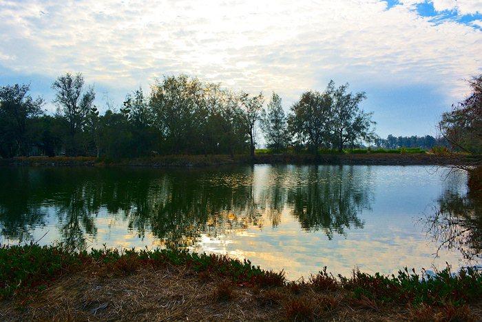 夕陽餘暉中的「新塭苗圃」,一旁的水塘四周林木密生,與池水相映成趣。。 記者趙惠群/攝影