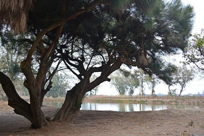 「新塭苗圃」純為造林,園內沒有太多人工化的設施,幽靜而有世獨立的氛圍,這裡由於沒有遊客,所以鳥類特別多,包括那些嬌貴稀的過境冬候鳥。 記者趙惠群/攝影