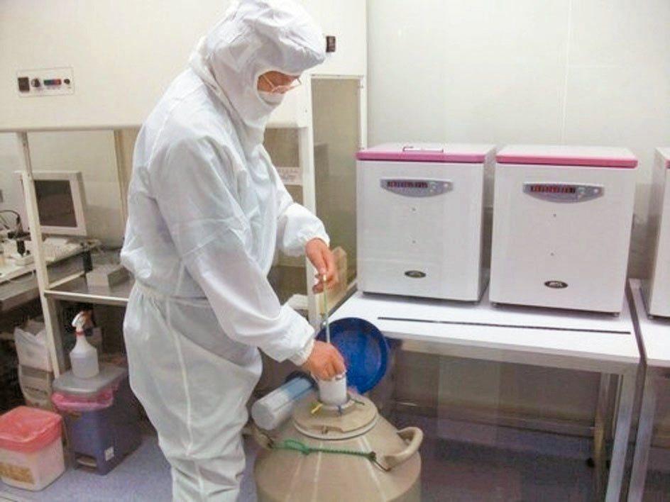 圖為執行冷凍卵子儲存。 圖/醫師蔡鋒博提供