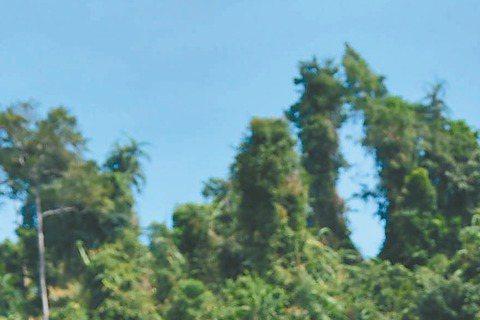 陳怡蓉隨TVBS「哇!陳怡君」劇組到馬來西亞沙巴取景拍攝,在海灘取景時袁詠琳穿比基尼展露身材,她外表洋派,其實內心保守,昨竟是她第一次在海邊穿比基尼,小時候媽媽管很嚴,連細肩帶小可愛都不准穿。而陳怡...
