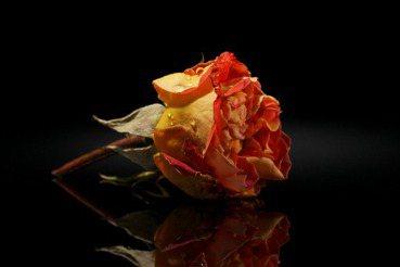 「玫瑰中毒」,看見台灣品牌發展的空洞與虛無