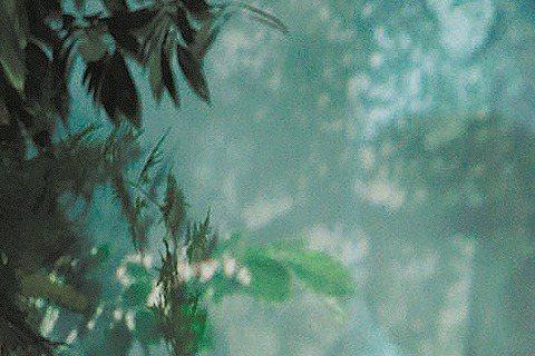 「Dream Girls」成員宋米秦嫁韓式餐廳老闆陳鎧文,2人相識6年多、交往1年多,今年4月登記結婚,實現當年玩笑嫁台灣郎取得工作證事;婚禮前一晚,宋米秦緊張失眠,稱準備婚禮比工作還累,原本纖瘦的...