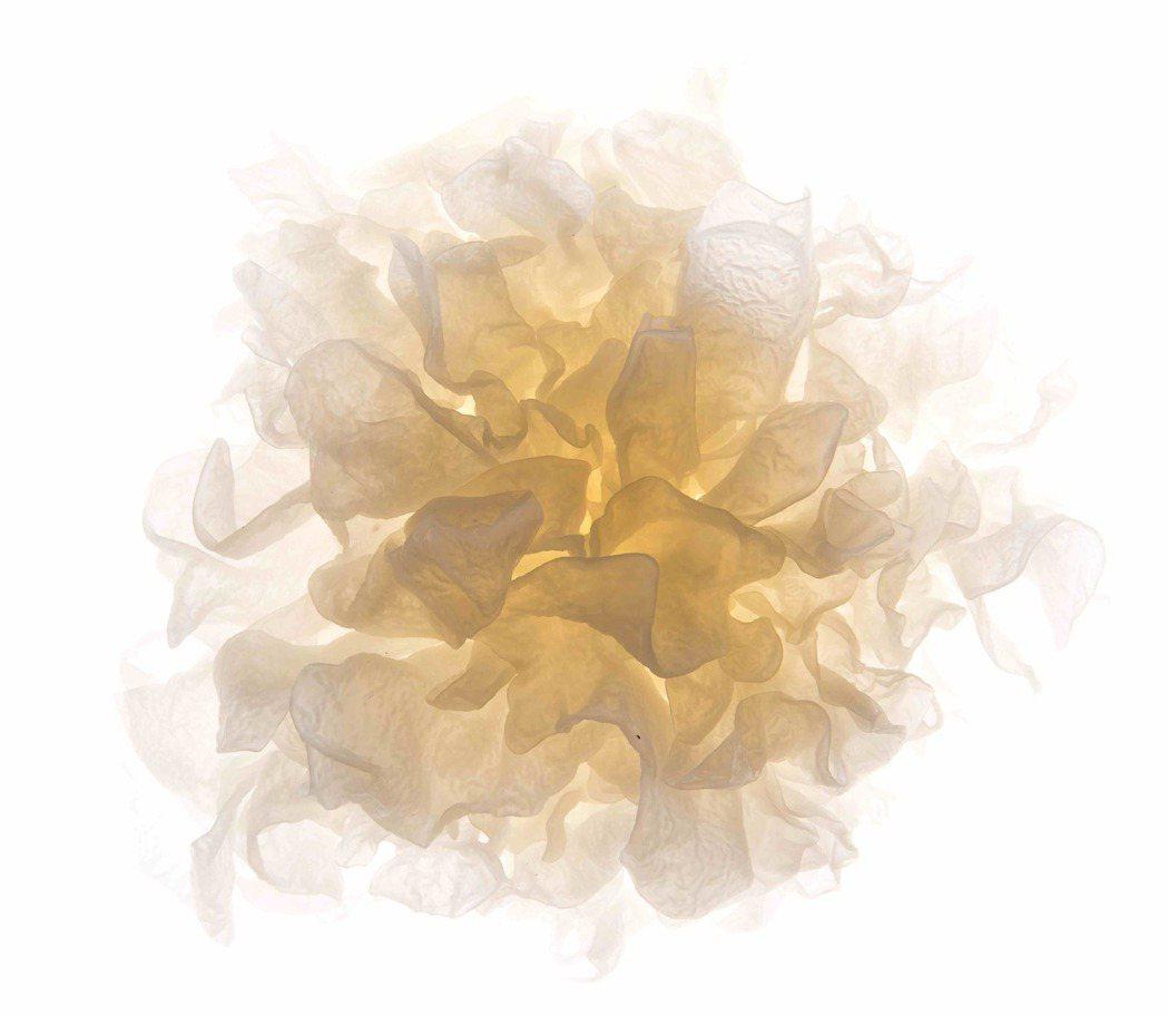 生鮮白木耳看起來很像大朵的牡丹花,蘊藏著極大的營養價值。 圖片來源/8more提...