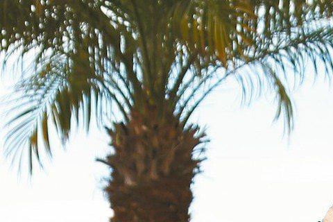 侯孝賢導演新作「聶隱娘」昨在坎城舉行記者會,現場吸引爆滿的記者。舒淇在片中飾演唐代女殺手,為戲苦練吃足苦頭、傷痕累累,甚至差點和侯孝賢翻臉說,「別人拍戲是噴香水、我們是噴藥水」。舒淇也說,此次演出最...