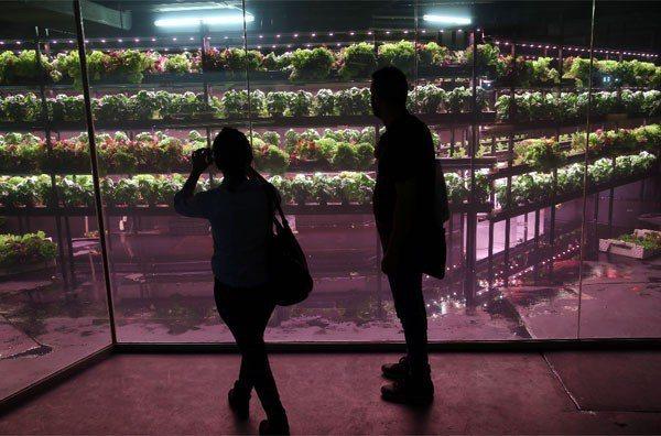 比利時館生態水耕。 記者林俊良/攝影