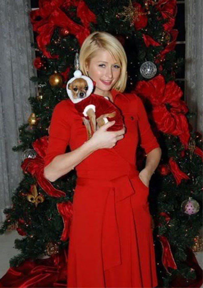 派瑞絲希爾頓在 Instagram 宣布壞消息,陪了她14年的吉娃娃Tinker...