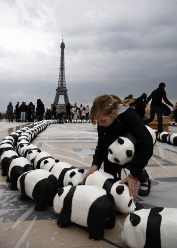 法國藝術家Paulo Grangeon「紙貓熊大軍展」。圖;文/美麗佳人